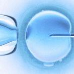 Le don d'ovocytes en France et en Espagne
